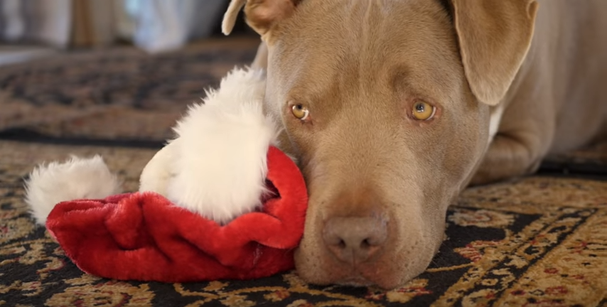 "Lacy J. Dalton releases ""Carl The Christmas Dog"" just in time for holidays"